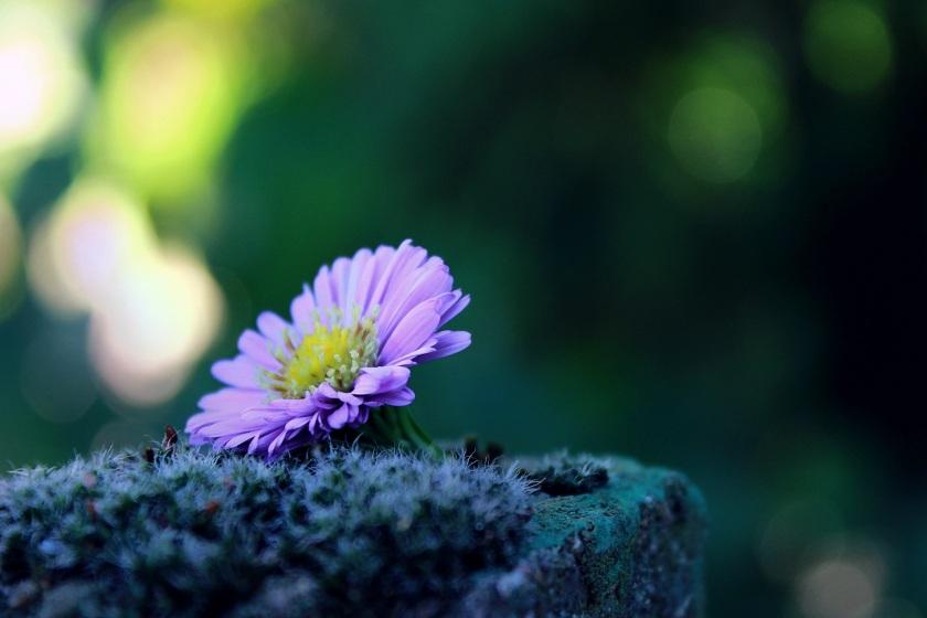 peaceful flower